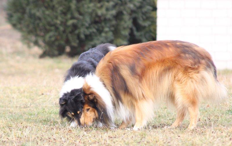 Rory und Clyde